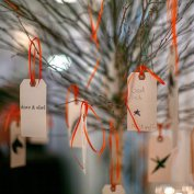 wishing tree @ the Picnic House