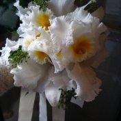 white cattelya orchid bQ.