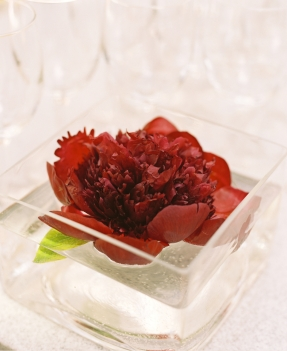 floating red charm peony. photo: Karen Wise.