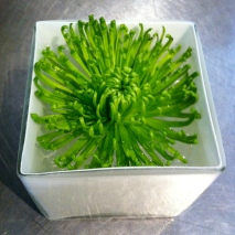 green spider mum floating in white cube. modern. clean.
