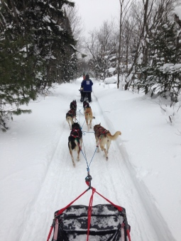 mushing in michigan @ Nature's Kennel