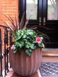 brooklyn heights stoop pot after