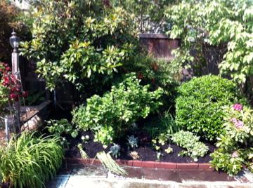 garden sherman after 2