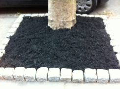 tree pit after